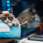 8 5 14 grumpy cat kabik 101 150x150 Grumpy Cat Takes Over Las Vegas LINQ Promenade