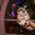8 5 14 grumpy cat kabik 12 150x150 Grumpy Cat Takes Over Las Vegas LINQ Promenade