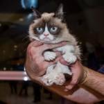 8 5 14 grumpy cat kabik 14 150x150 Grumpy Cat Takes Over Las Vegas LINQ Promenade