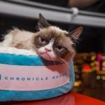 8 5 14 grumpy cat kabik 140 150x150 Grumpy Cat Takes Over Las Vegas LINQ Promenade
