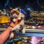 8 5 14 grumpy cat kabik 223 150x150 Grumpy Cat Takes Over Las Vegas LINQ Promenade