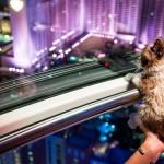 8 5 14 grumpy cat kabik 287 150x150 Grumpy Cat Takes Over Las Vegas LINQ Promenade