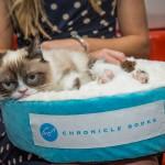 8 5 14 grumpy cat kabik 31 150x150 Grumpy Cat Takes Over Las Vegas LINQ Promenade