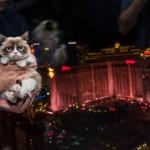 8 5 14 grumpy cat kabik 58 150x150 Grumpy Cat Takes Over Las Vegas LINQ Promenade