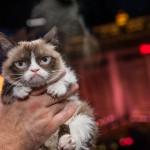 8 5 14 grumpy cat kabik 66 150x150 Grumpy Cat Takes Over Las Vegas LINQ Promenade