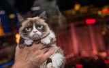 Grumpy Cat 7