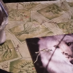 Alpha Wolf Adoption Kit