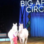 Britney's Circus The 10th Anniversary Horses 3