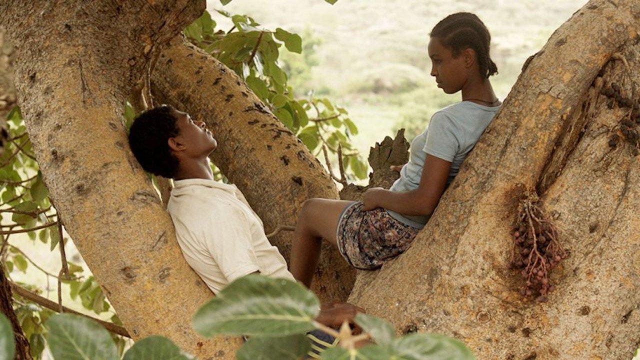 Fig Tree Movie