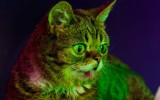 Lil-Bub-and-Friendz